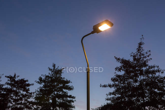 Silhouettes of trees and illuminated street lamp in darkness — Stock Photo