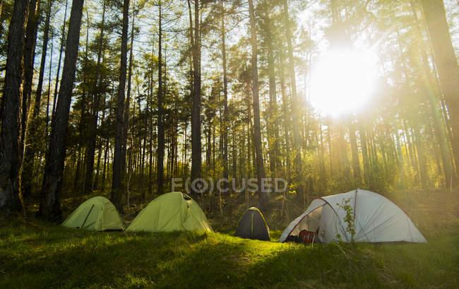 Quatre tentes dans soleil vert allumé forêt — Photo de stock