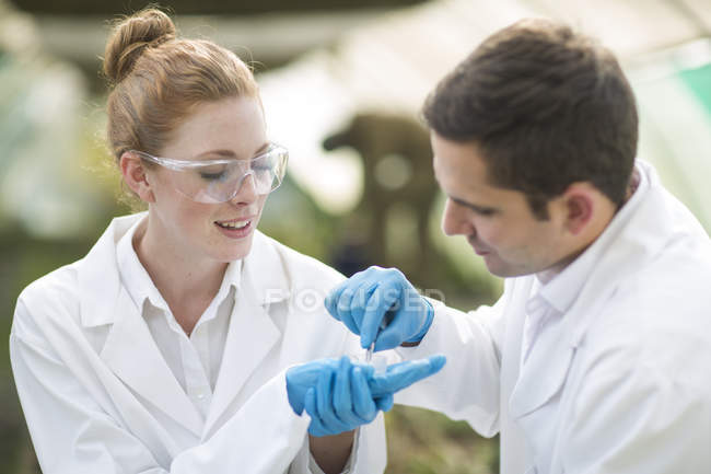 Male and female scientists looking at leaf sample in petri dish — Stock Photo