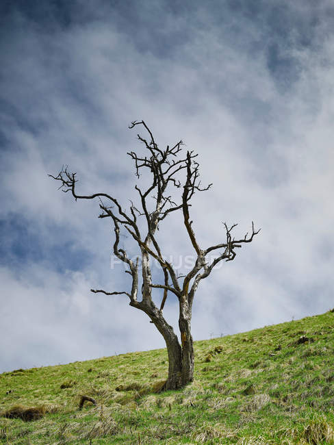Lone tree with no leaves — Stock Photo