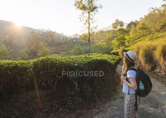 Jovem mulher olhando para plantações de chá perto de Munnar ao pôr do sol, Kerala, Índia — Fotografia de Stock