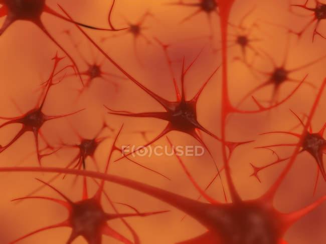 Primer plano extremo de las neuronas en el cerebro humano - foto de stock