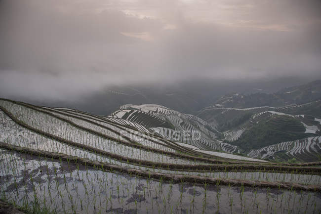 Elevated view of paddy fields under cloudy sky — Stock Photo