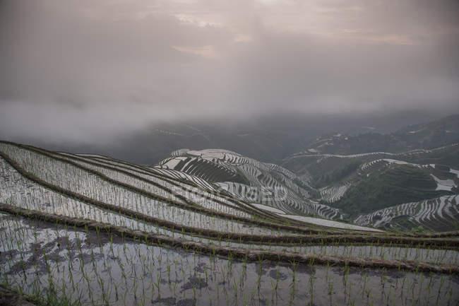 Vue des rizières sous ciel nuageux — Photo de stock