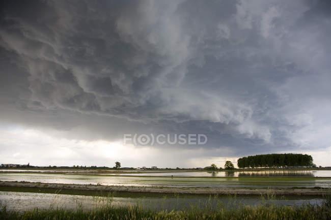 Malerische Aussicht auf Reisfeld unter bewölktem Himmel — Stockfoto