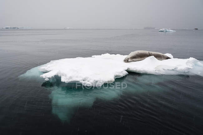 Icebergs under a stormy sky, Lemaire channel, Antarctica — Stock Photo