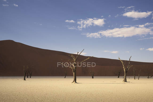 Árvores mortas na panela de barro na luz solar brilhante, Namíbia — Fotografia de Stock