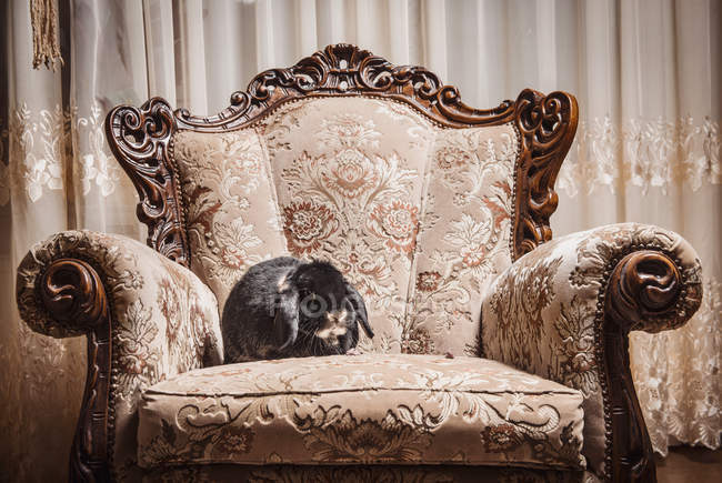 Portrait of rabbit sitting on ornate chair — Stock Photo