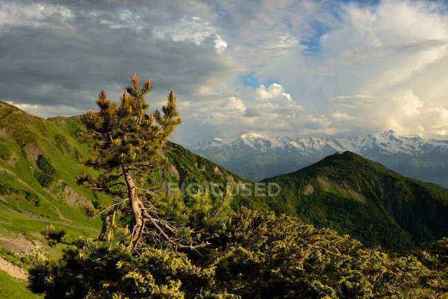 Trees and hills covered in lush greenery in bright sunlight — Stock Photo