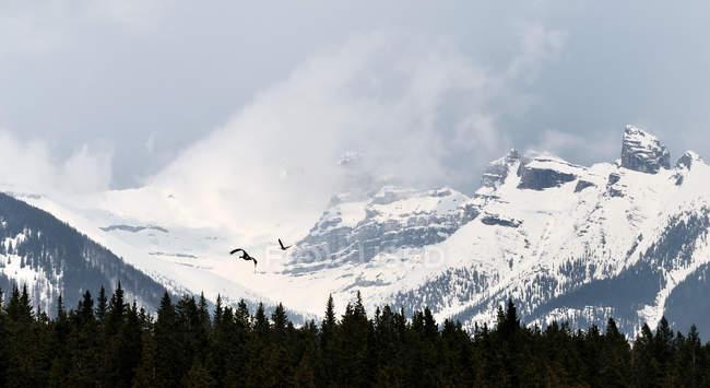 Oche canadesi che volano in montagna — Foto stock