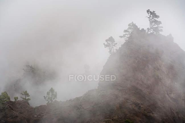 Árboles que crecen en acantilados de nieblas - foto de stock