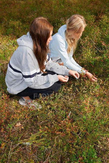Women picking berries in forest — Stock Photo