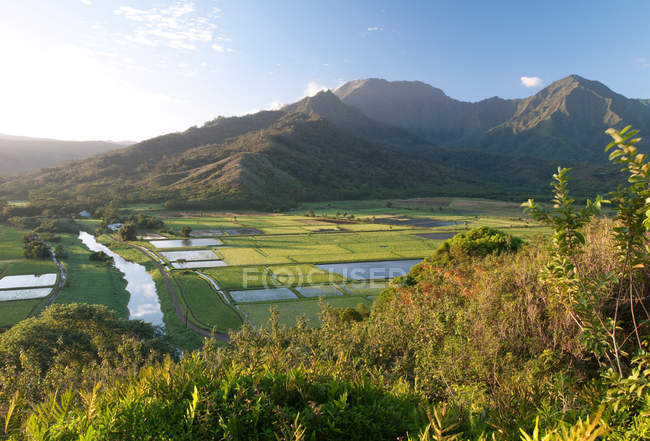 Vue panoramique sur la vallée d'Hanalei, Hanalei, Kauai, Hawaii — Photo de stock
