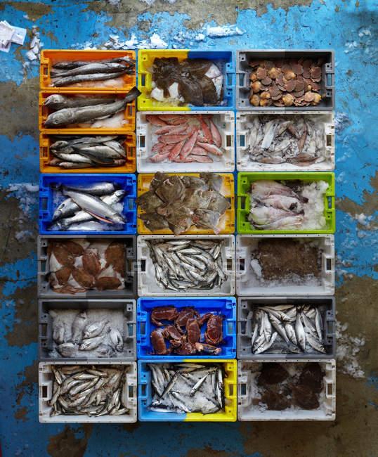 Crea di frutti di mare su superficie squallida — Foto stock