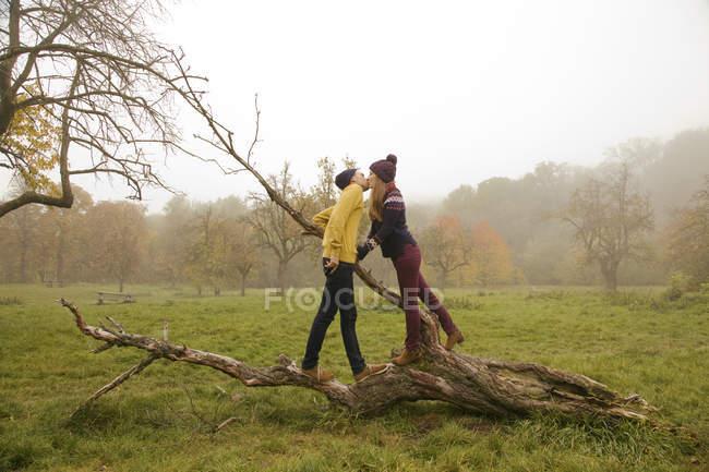 Молодая пара целуется на голом дереве в туманном парке — стоковое фото