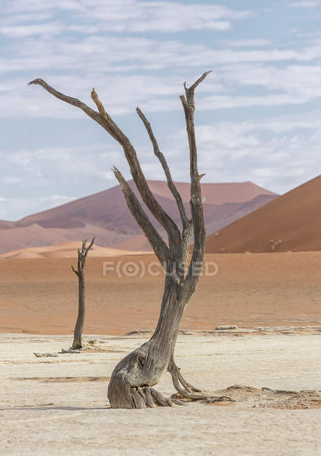 Dead tree, clay pan and sand dunes, Deaddvlei, Sossusvlei National Park, Namibia — Stock Photo