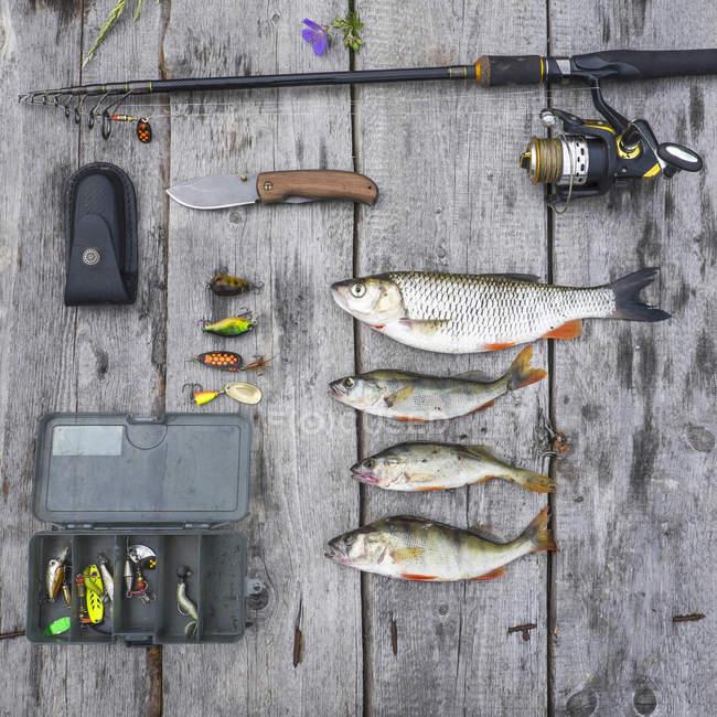 Nature morte de quatre poissons capturés et équipement de pêche — Photo de stock