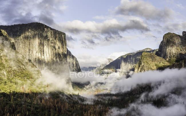 Підвищені подання туман над Долина ліс Національний парк Йосеміті, Каліфорнія, США — стокове фото