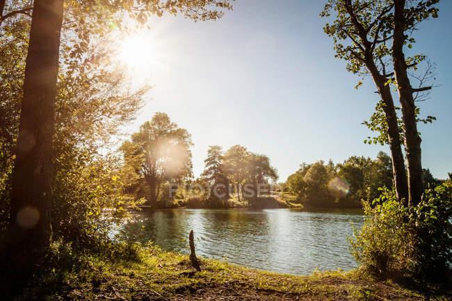 Árvores que crescem por lago rural — Fotografia de Stock