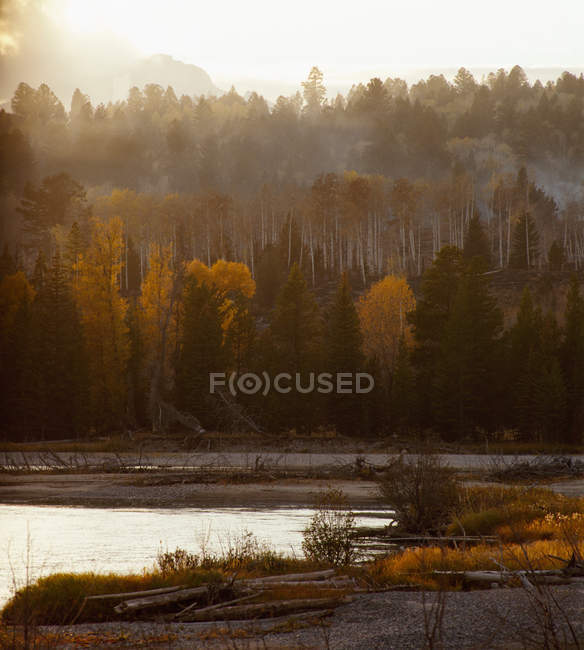 Parc national Yellowstone — Photo de stock