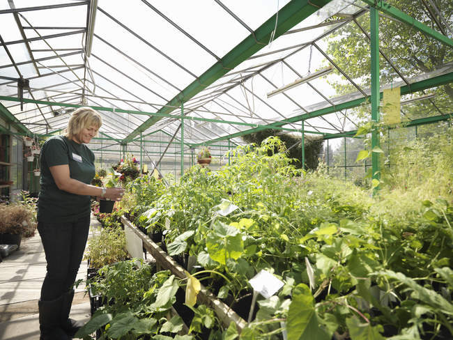 Female Garden Center Worker With Plants — Stock Photo