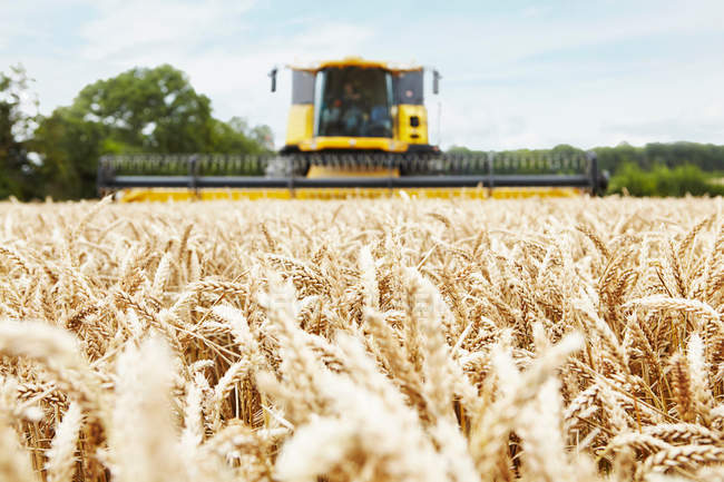 Harvester working in crop field — Stock Photo