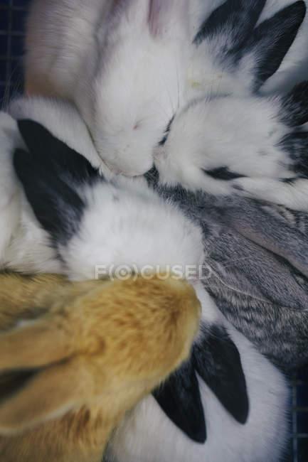 Вид сверху на кроликов, собранных вместе на Шанхайском птичьем и цветочном рынке, Китай — стоковое фото