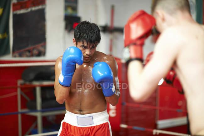 Два боксерів спаринг боксерський ринг — стокове фото