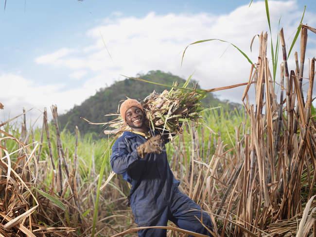 Trabalhador carregando cana de açúcar — Fotografia de Stock
