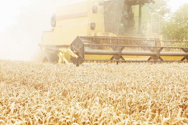 Tractor cosechando granos en el campo de cultivo - foto de stock