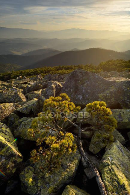 Gorgany Mountain Ridge, views from Sinyak mountain, Carpathian Mountains, Ivano-Frankovsk Region, Ukraine — Stock Photo