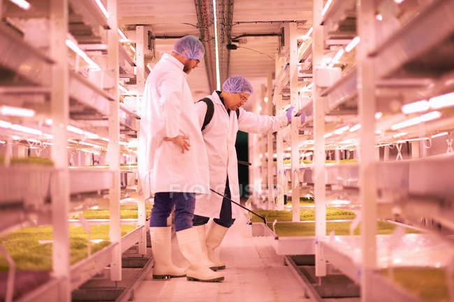 Travailleurs masculins pulvérisant des étagères de micro-verts dans une pépinière souterraine, Londres, Royaume-Uni — Photo de stock