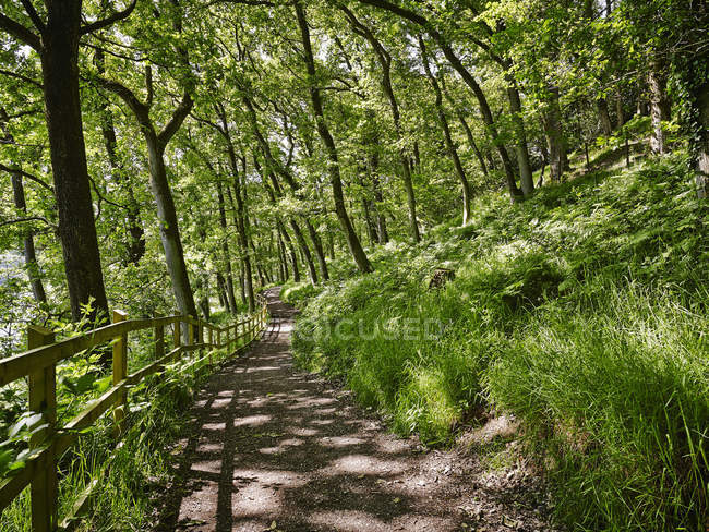 Fencing at green forest path in sunlight — Stock Photo