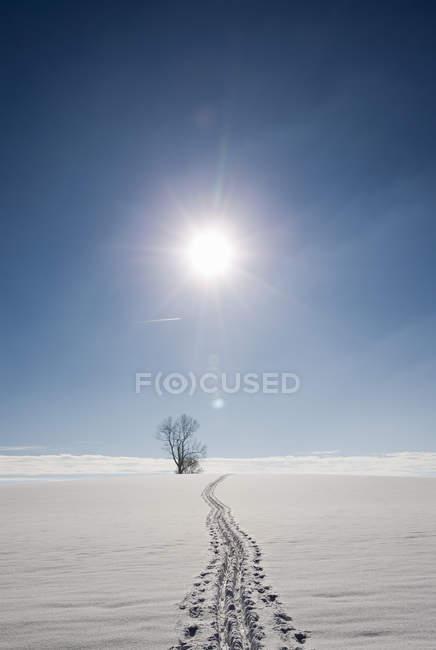 Impronte nel paesaggio innevato illuminato dal sole, Berg, Baviera, Germania — Foto stock