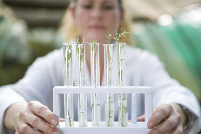 Female scientist holding up plant samples in test tubes — Stock Photo