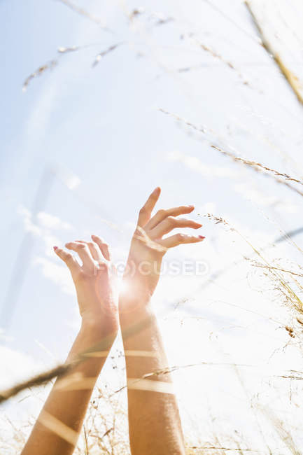 Young womans hands amongst long grass — Stock Photo