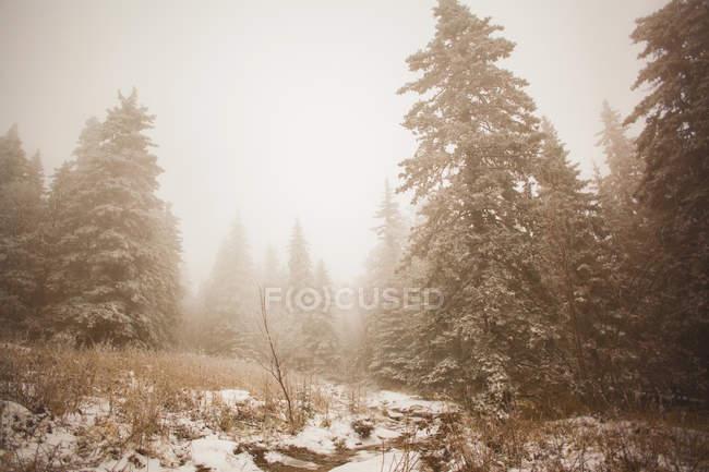 Snow covered forest in mist, Sarsy Village, Sverdlovsk Oblast, Russia — Stock Photo