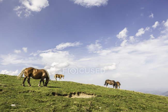 Коні випасу на родовищі в Сен-Мішель, Піренеях, Франція — стокове фото