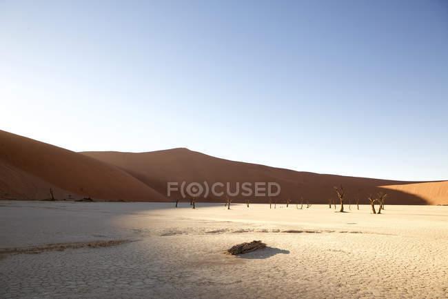 Arbres morts sur poêle à argile en plein soleil, Namibie — Photo de stock