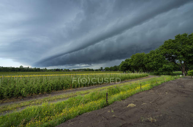 Céu verde, campo, árvores e a tempestade — Fotografia de Stock