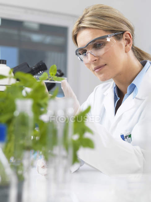 Scientist viewing development of experimental plants in research laboratory — Stock Photo