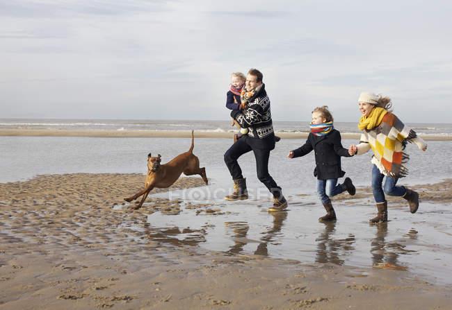 MID дорослих батьків з сином, дочкою і собакою працює на пляжі, Блумдаль-ан-Зее, Нідерланди — стокове фото