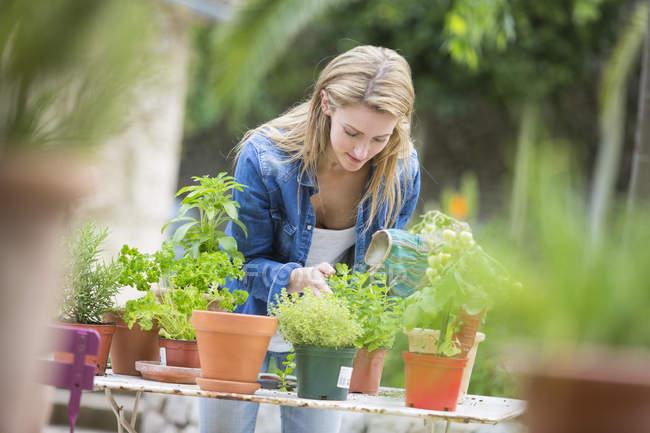 Jeune femme qui tend les plantes d'herbe à la table de jardin — Photo de stock