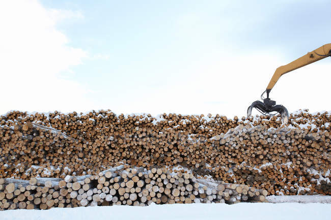 Tractor lifting logs on winter — Stock Photo