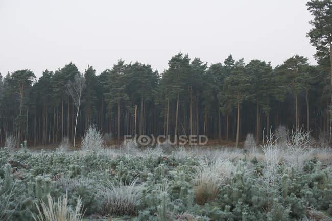 Forest scene in winter — Stock Photo