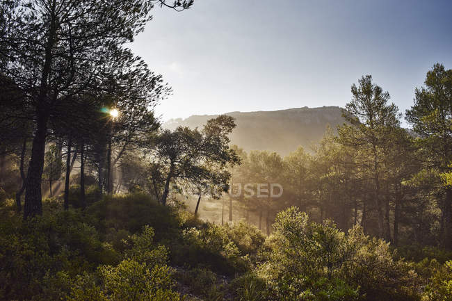 Sun lighted green trees with hill and clear blue sky — Stock Photo