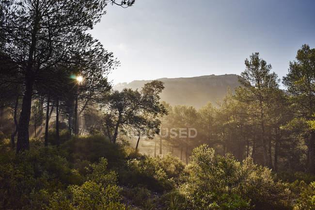 Alberi illuminati verdi con la collina del sole e cielo blu — Foto stock