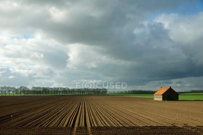 Trees growing at edge of dry field — Stock Photo