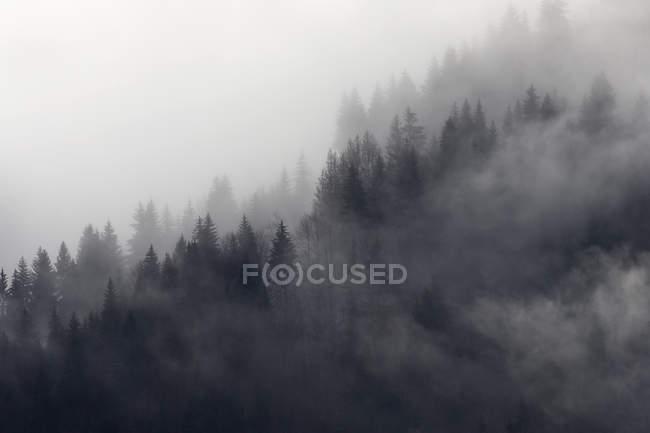 Bosque nublado, Murren, Bernese Oberland, Suiza - foto de stock