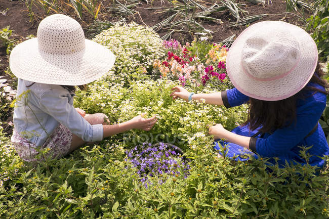 Two females wearing sun hats, tending to plants, overhead view — Stock Photo
